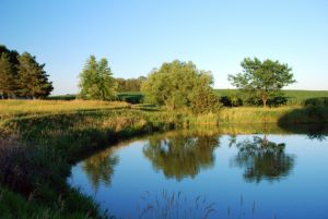 A farm 'pond'   (Credit: Dreamstime)